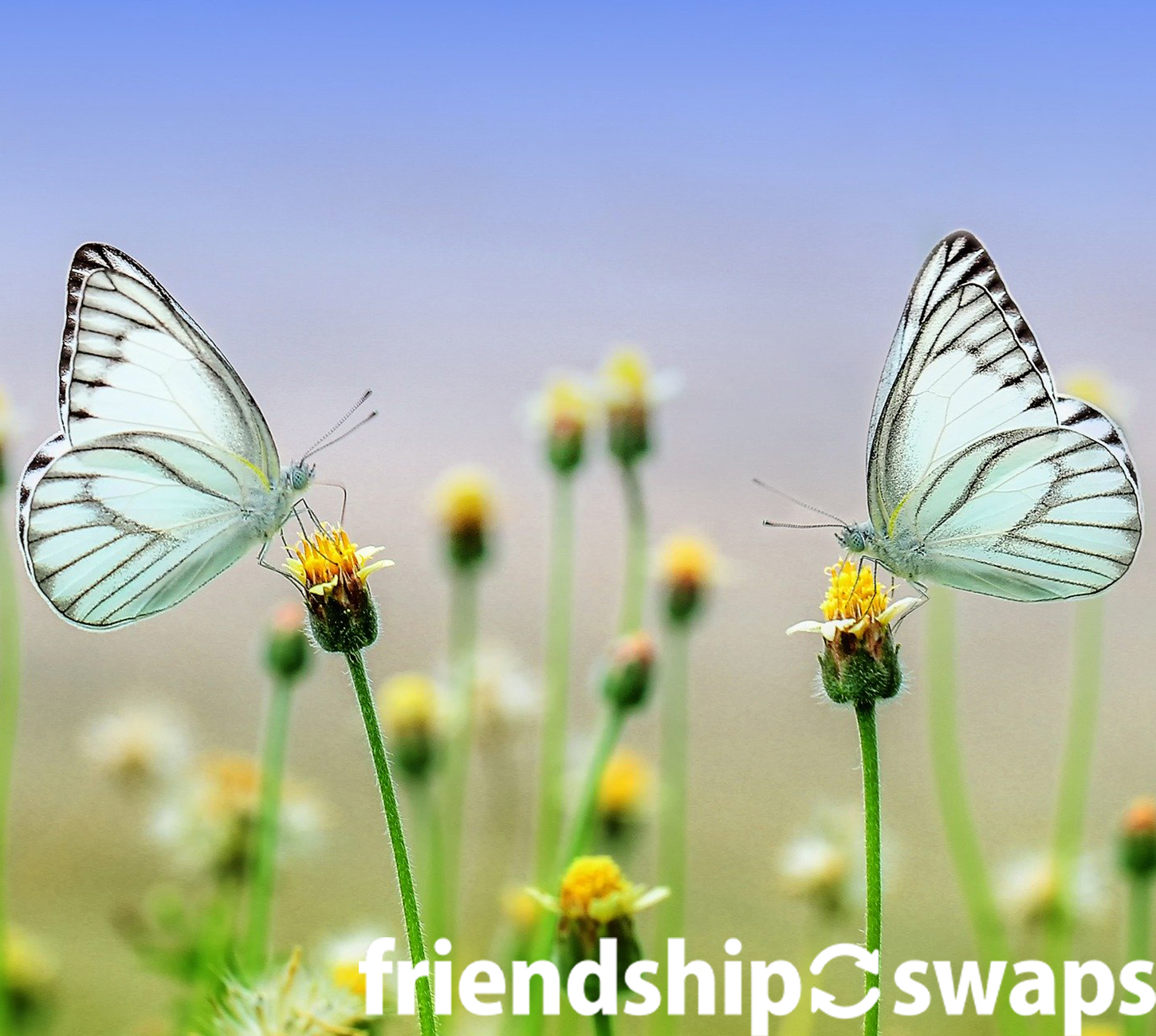 Swaps are a big part of Girl Scout Traditions. Whether it is cute penguins or dogs, these animal swaps are perfect for all occasions! #friendshipswaps #swaps #trading #tradingpins #girlscoutswaps #gsswaps #animalswaps #animals