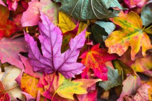 fall and halloween swap ideas for girl scouts